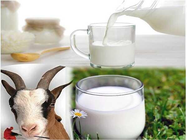 Mơ thấy sữa điềm lành hay điềm giữ