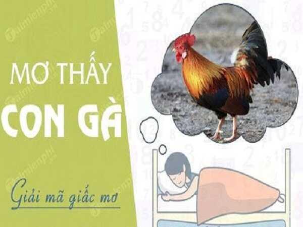 Tổng hợp ý nghĩa giấc mơ thấy con gà