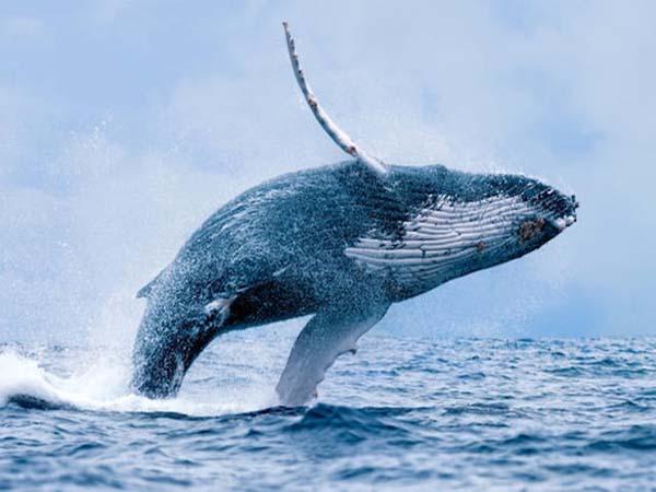 Ngủ mơ thấy cá voi - Đánh xổ số con gì khi chiêm bao thấy cá voi