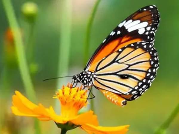Mơ thấy bướm là điềm gì? Đánh con gì may mắn nhất?