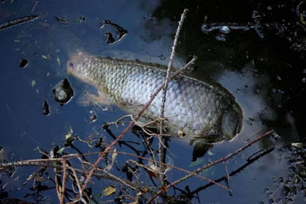 Nằm mơ thấy cá chết là điềm báo gì? nên đánh con gì hôm nay